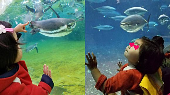 1歳の子供を連れて遊ぶなら葛西臨海水族園がおすすめ