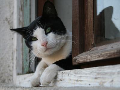 ネコのイメージ